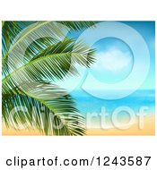 Tropical Beach With White Sand And A Palm Tree Branch