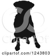 Black Silhouetted Labrador Retriever Dog Sitting
