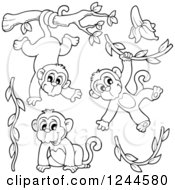 Black And White Playful Monkeys And Vines