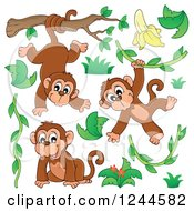 Playful Monkeys And Vines