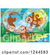 Playful Monkeys At Sunset