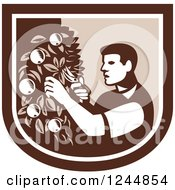 Retro Woodcut Farmer Pruning Apple Trees In A Shield