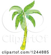 Clipart Of A Green Banana Tree Royalty Free Vector Illustration