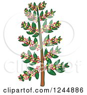 Clipart Of A Coffee Tree Royalty Free Vector Illustration