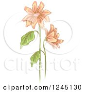 Clipart Of Peach Daisy Flowers Royalty Free Vector Illustration