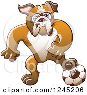 Clipart Of A Soccer Bulldog Resting A Foot On A Ball Royalty Free Vector Illustration by Zooco