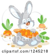 Clipart Of A Happy Gray Rabbit Sitting With A Carrot In A Garden Royalty Free Vector Illustration by Alex Bannykh