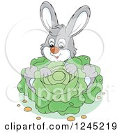 Happy Gray Bunny Rabbit Sitting With Cabbage In A Garden