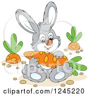 Clipart Of A Happy Gray Bunny Rabbit Sitting With A Carrot In A Garden Royalty Free Vector Illustration by Alex Bannykh