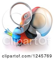 3d Macaw Parrot Looking Through A Magnifying Glass