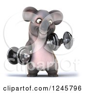 Clipart Of A 3d Koala Working Out With Dumbbells Royalty Free Illustration