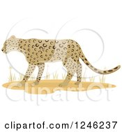 Clipart Of A Leopard Big Cat And Grasses Royalty Free Vector Illustration