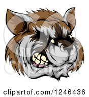 Clipart Of A Snarling Aggressive Raccoon Mascot Head Royalty Free Vector Illustration