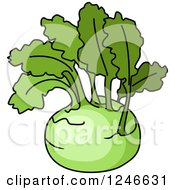 Clipart Of A Kohlrabi Royalty Free Vector Illustration