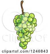 Clipart Of Green Grapes Royalty Free Vector Illustration