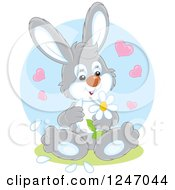 Clipart Of A Gray Bunny Rabbit Playing She Loves Me She Loves Me Not With Flower Petals Royalty Free Vector Illustration