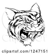 Clipart Of A Black And White Hissing Tiger Mascot Head Royalty Free Vector Illustration