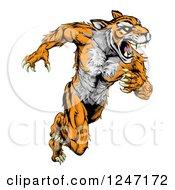 Clipart Of A Fierce Muscular Running Tiger Mascot Royalty Free Vector Illustration by AtStockIllustration