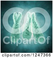 Clipart Of 3d Chromosomes X And Y Royalty Free Illustration by Mopic