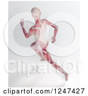 3d Aerial View Of A Female Running With Visible Muscle