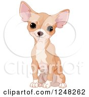 Clipart Of A Cute Tan Chihuahua Dog Sitting Royalty Free Vector Illustration by Pushkin