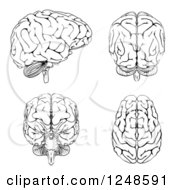 Clipart Of Black And White Human Brains At Different Angles Royalty Free Vector Illustration