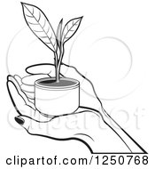 Clipart Of Black And White Hands Holding A Tea Leaf Plant Royalty Free Vector Illustration