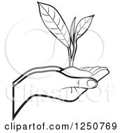 Clipart Of Black And White Hands Holding A Tea Leaf Plant And Soil Royalty Free Vector Illustration