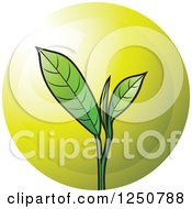 Clipart Of A Green Tea Leaf Plant And Gold Circle Royalty Free Vector Illustration by Lal Perera