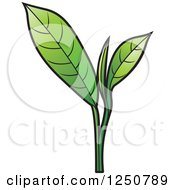 Clipart Of A Green Tea Leaf Plant Royalty Free Vector Illustration by Lal Perera