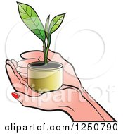 Clipart Of Hands Holding A Tea Leaf Plant Royalty Free Vector Illustration