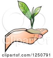 Clipart Of Hands Holding A Tea Leaf Plant And Soil Royalty Free Vector Illustration