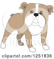 Clipart Of A Cute Standing English Bulldog Royalty Free Vector Illustration
