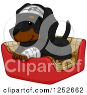 Clipart Of A Cute Dachshund Dog Bandaged Up And Resting In A Bed Royalty Free Vector Illustration by BNP Design Studio