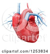 Clipart Of A 3d Human Heart Over White Royalty Free Illustration