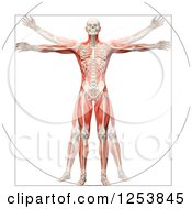 Clipart Of A 3d Vitruvian Man With Visible Skeleton And Muscles Royalty Free Illustration