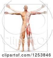 Clipart Of A 3d Vitruvian Man With Visible Skeleton Skin And Muscles Royalty Free Illustration