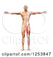 Clipart Of A 3d Man With Visible Skeleton Skin And Muscles Royalty Free Illustration