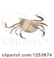 Clipart Of A 3d Lyme Disease Deer Tick On White Royalty Free Illustration
