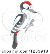 Woodpecker Bird On A Tree