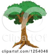 Clipart Of A Tree With A Tall Trunk And Lush Canopy Royalty Free Vector Illustration by Pushkin