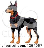 Alert Doberman Pinscher Guard Dog