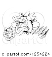 Clipart Of A Black And White Aggressive Bulldog Breaking Through A Wall Royalty Free Vector Illustration