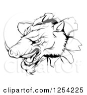 Clipart Of A Black And White Aggressive Boar Mascot Breaking Through A Wall Royalty Free Vector Illustration by Geo Images