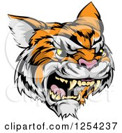 Clipart Of A Roaring Angry Tiger Mascot Head Royalty Free Vector Illustration