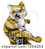 Clipart Of A Punching Muscular Cougar Man Mascot Royalty Free Vector Illustration