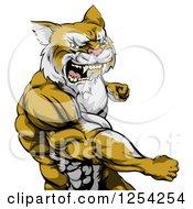Punching Muscular Cougar Man Mascot