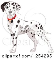 Clipart Of A Cute Dalmatian Dog Wearing A Red Collar Royalty Free Vector Illustration