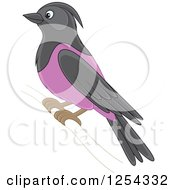 Clipart Of A Purple Martin Bird Royalty Free Vector Illustration