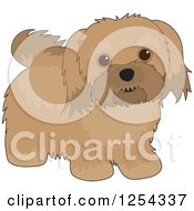 Clipart Of A Cute Havanese Dog Royalty Free Vector Illustration